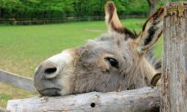Abused Donkey's Life Was on the Line, Until 12,000 Animal Lovers Sign PETITION to Save Him