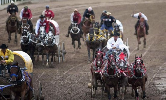 'Baywatch' Star Pamela Anderson Calls on Alberta Premier to End Chuckwagon Races