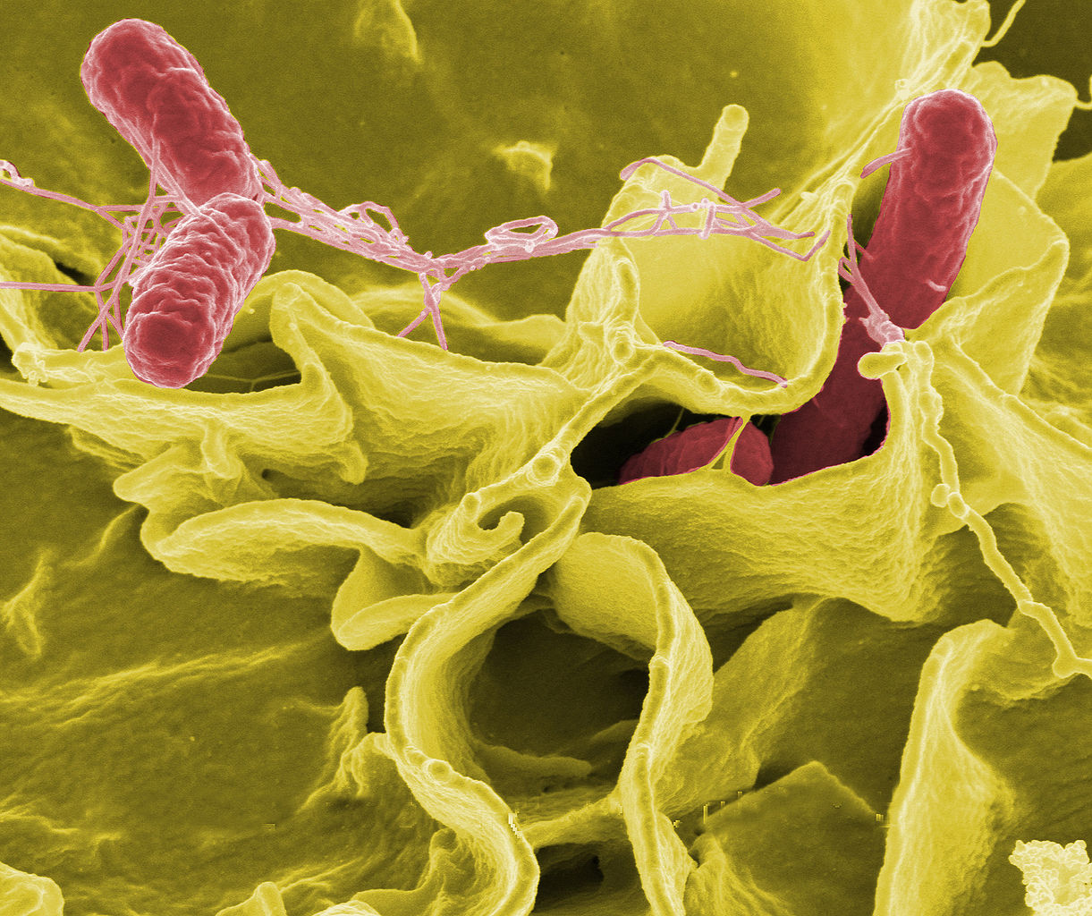 Salmonella outbreak tied to dog treats expands to 27 states