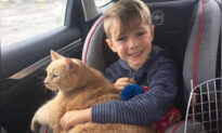 Mom Asks Son to Adopt Any Pet From Shelter, So He Picks Huge Elderly Marmalade Cat
