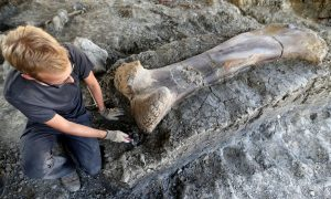 Giant Dinosaur Bone Found in Southwestern France