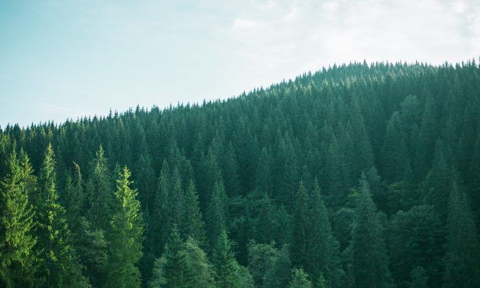 A stock photo of a forest (Shutterstock)