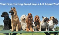 The Dog Breed You Choose Can Reveal Your True Self: Let's Sniff Out Your Personality!