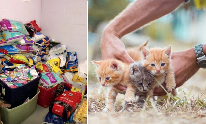 (L) An image of the cat food collected by the Muncie Police Department. (Muncie Police Department/Facebook) (R) A stock image of kittens. (Olgaozik/Pixabay)