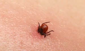 Tick Bites Leave Girl Unable to Move as Doctors Diagnose Rare 'Tick Paralysis'