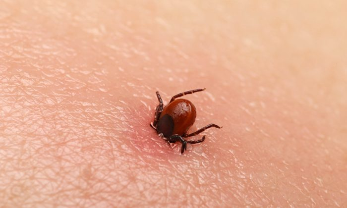 A stock image of a tick. (Shutterstock)