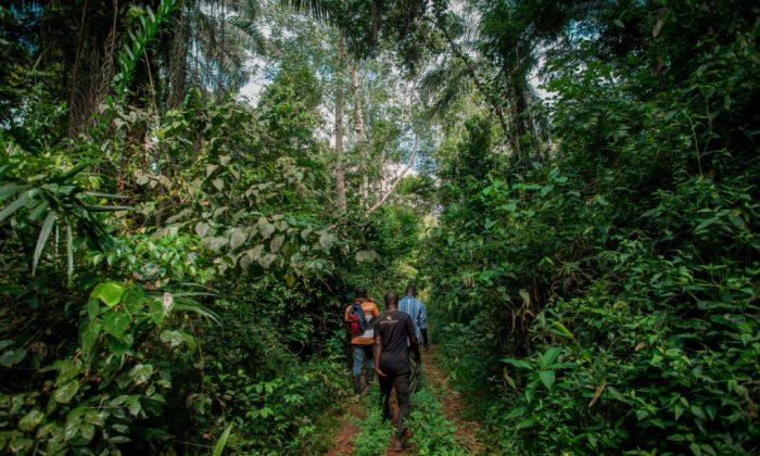Forest wardens walk into Kyebi Forest Reserve in the East Akim Municipal District in Eastern Region, Ghana, on Nov. 5, 2018. (Cristina Aldehuela/AFP/Getty Images)