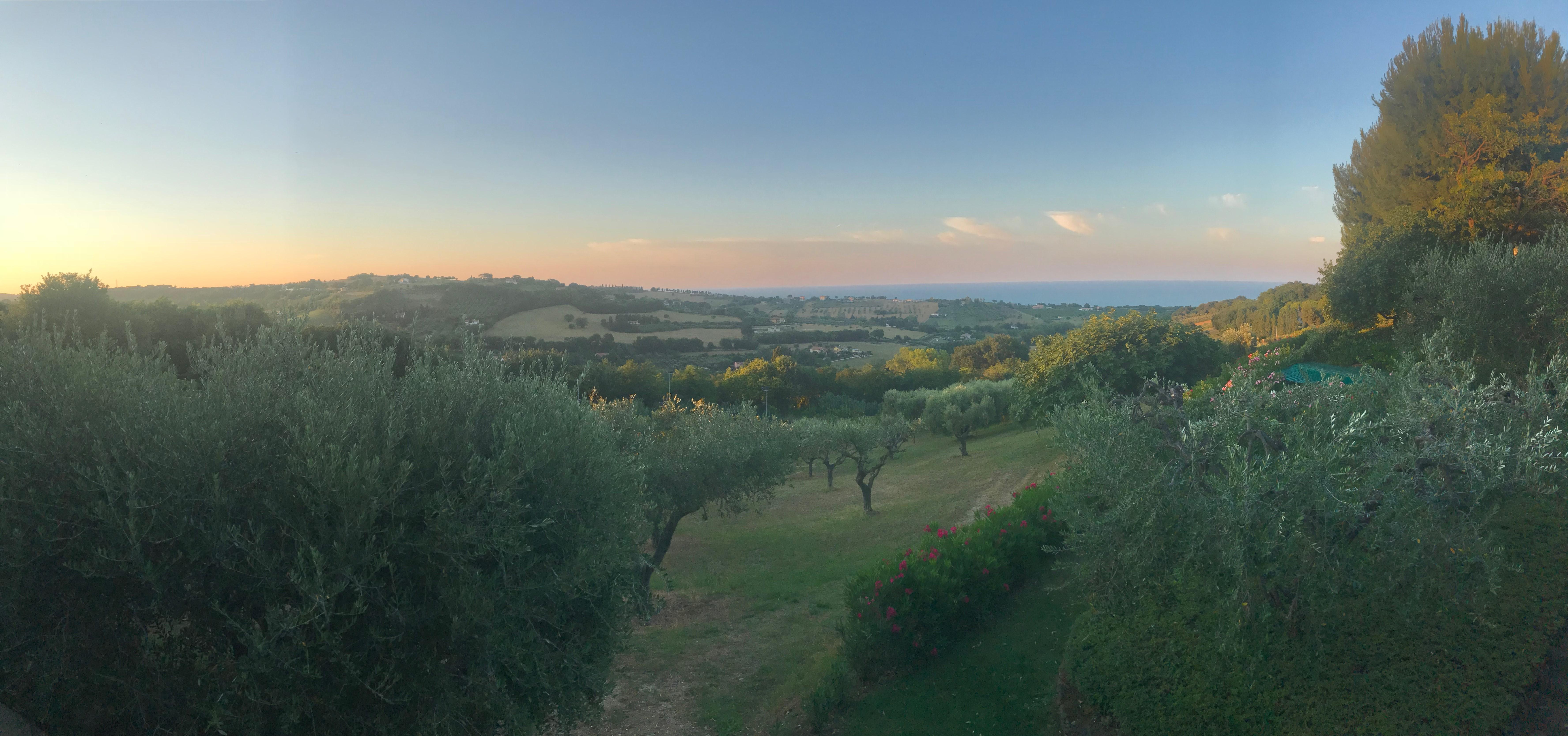 Villa Olivo Olive grove