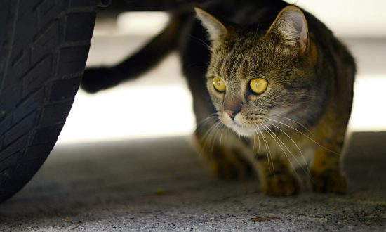 Boy Knocked Down by Bully—Then Cat Flew Out From Under Car, Defending Him Heroically