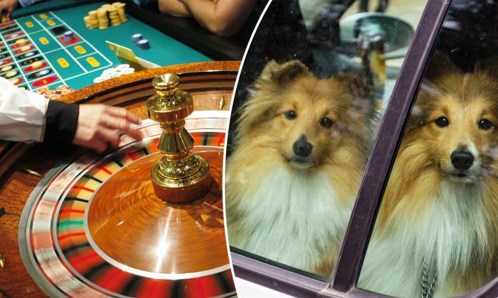 Woman Gambled for 10 Hours at Casino, Locking 3 Dogs in Hot Car for