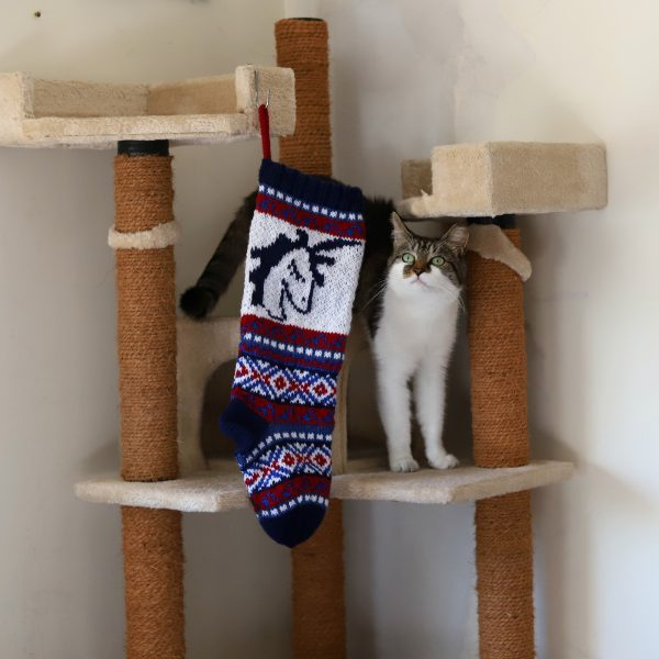 A cat with a stocking