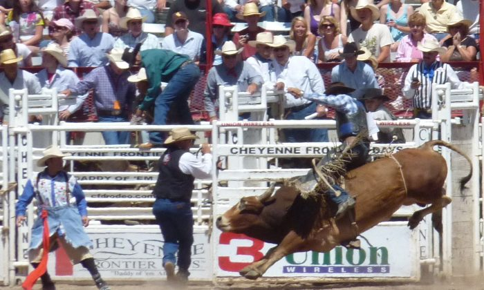 Rodeo is the main draw at Cheyenne Frontier Days. (Rich Grant)