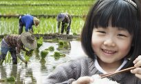 Words of Wisdom: 'Talking' Rice Grain Convinces Little Girl Not to Waste Food