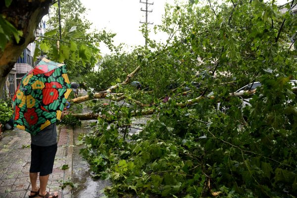 Man holding an umbrella stands near a fallen tree after supertyphoonLekima made landfall in Wenling, Zhejiang