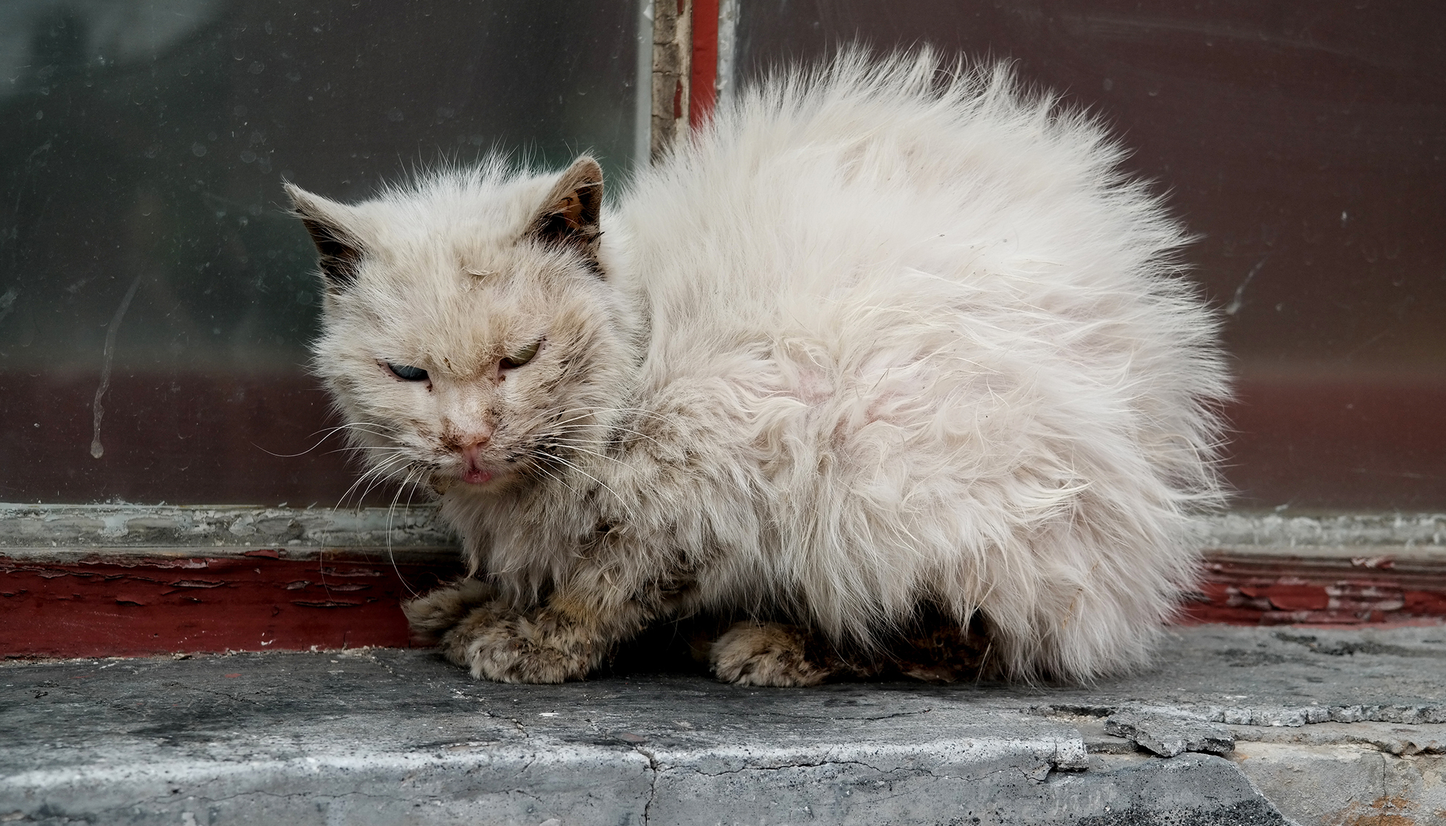 People Were Told Not to Touch 'Ugly Cat,' One Man Does and It Changed His Life