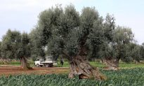Greek Farmer Discovers 3,400-Year-Old Tomb Hidden Just Below His Olive Grove