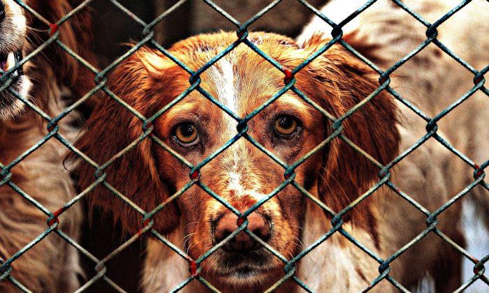 A dog at an animal shelter. (Alexas_Fotos/Pixabay)