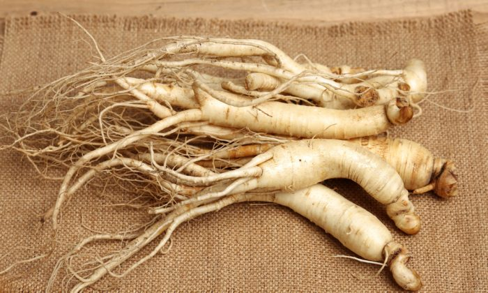 Ginseng is a root with compounds called ginsenosides that have multiple therapeutic benefits. (Shutterstock)