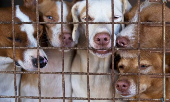 Delaware Is First and Only No-kill State With 92.9 Percent of Its Shelter Animals Saved