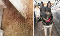 German Shepherd 'Teaches' Thief a Serious Lesson and Saves Owner's Property