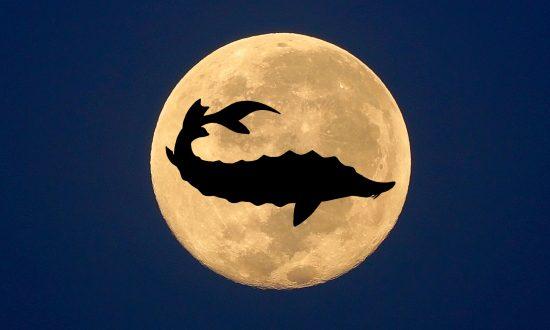 August Full Moon: A Splendid Sturgeon Moon Is Set to Illuminate the Skies This Week