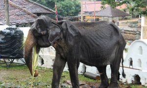 Sri Lankan Elephant Whose Photos Went Viral Later Collapsed, Says Minister