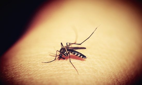 Nationwide Death Toll From Outbreak of Mosquito-Borne EEE Virus Creeps up to 8