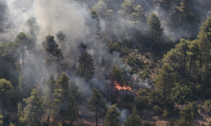 Fire burns forest near Stavros  village on the island of Evia, northeast of Athens, on Aug. 14, 2019. (Lou Gouliamaki/AFP/Getty Images)