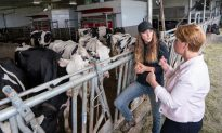 Ottawa Announces $1.75B to Compensate Dairy Farmers for Impact of Trade Deals