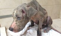 Puppy Starved for Months Dumped in Gutter Like Trash, Reward for Info Soars to $10,000