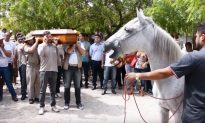 Heartbreaking Video Shows Grieving Horse Bidding His Owner a Final Goodbye at Funeral