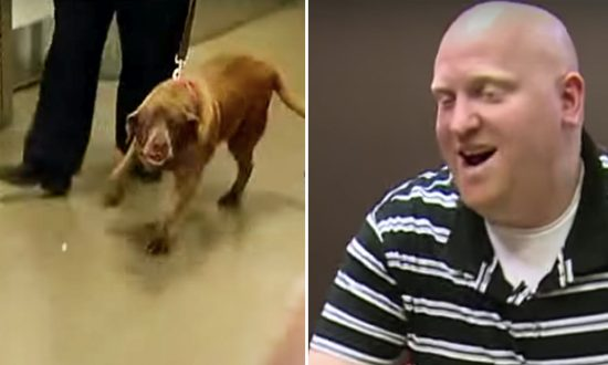 Military Dog Is Separated From Sergeant. 2 Years Later, She Hears Him Yelling Her Name