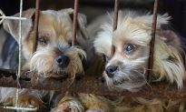 Colorado Man's Dog Dies, So He Adopts 10 Senior Dogs From Local Shelter to Give Them Home