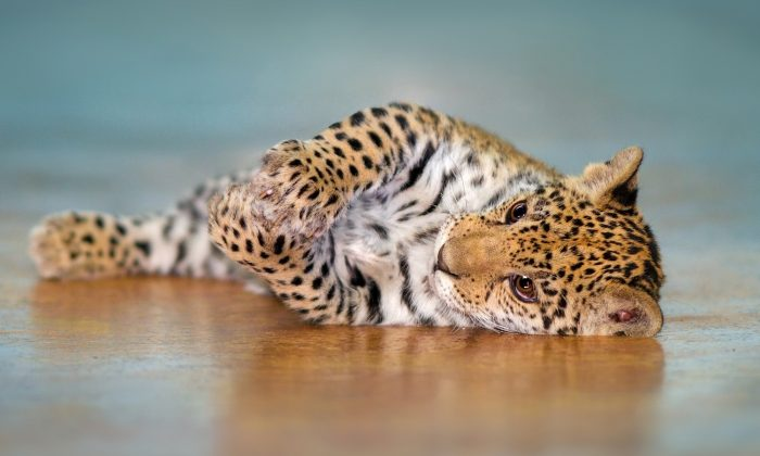 (Illustration - Shutterstock)