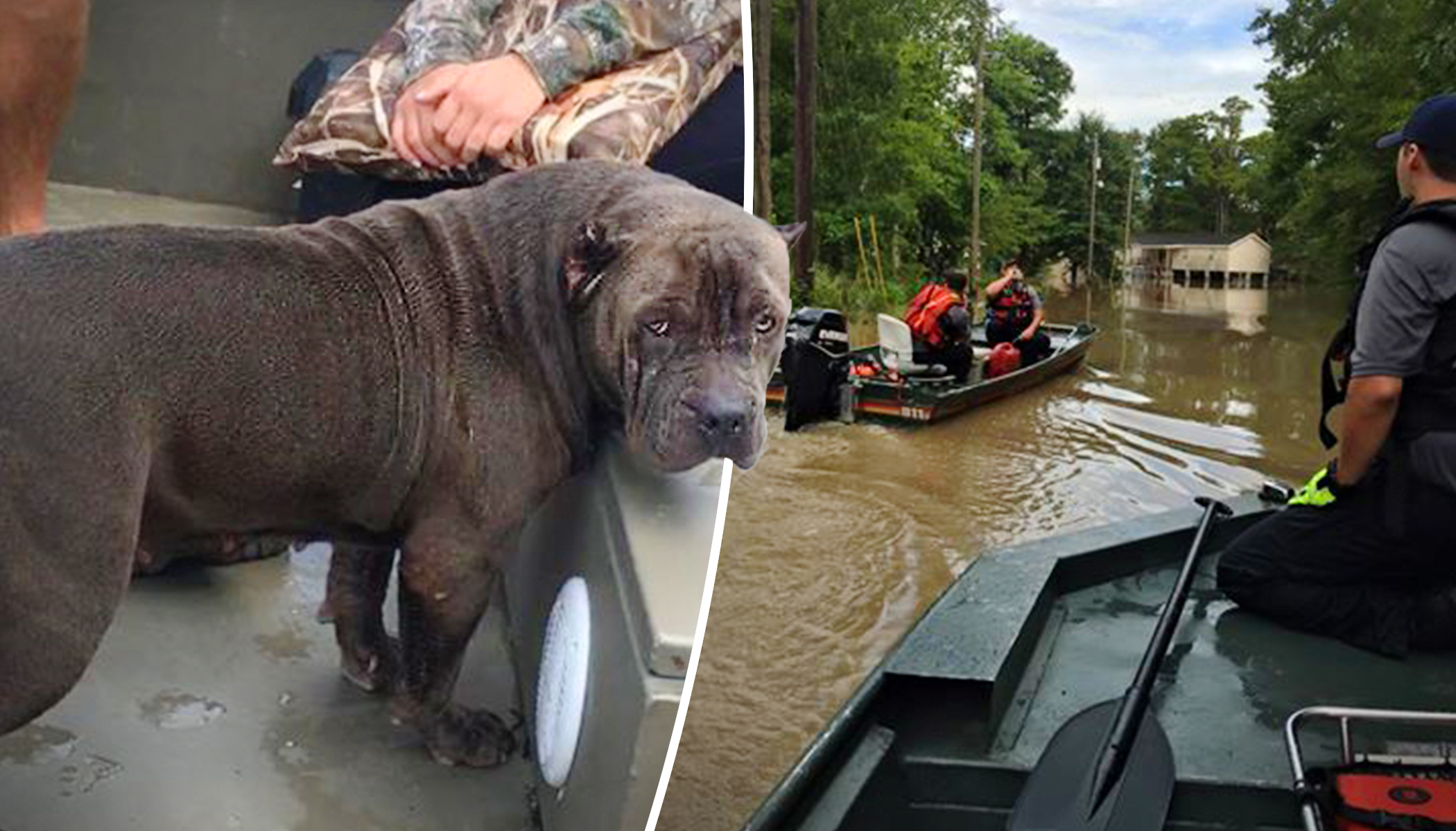Drowning Dog Gets Rescued During Louisiana Flood Moments Before Going Under