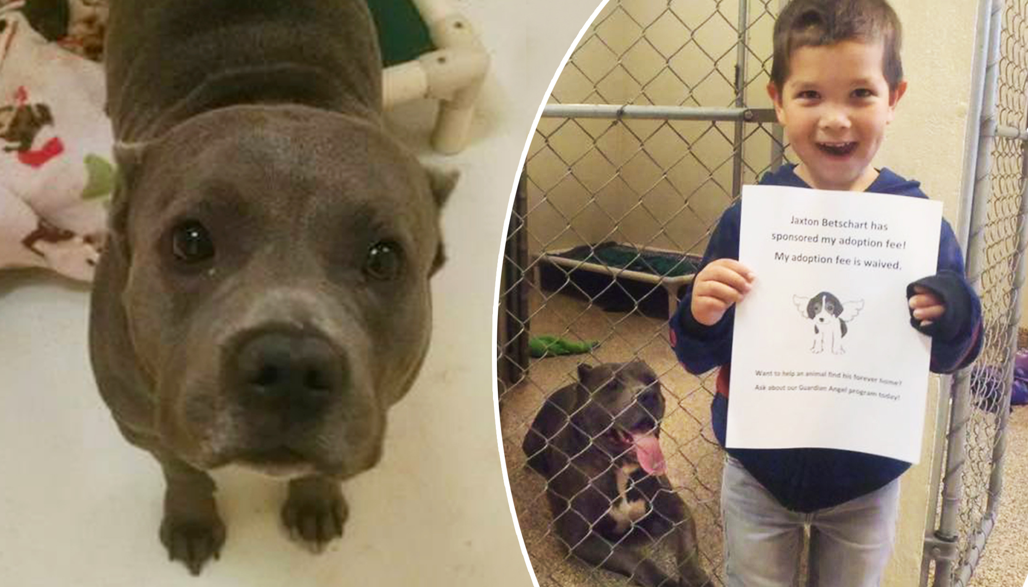 4-Year-Old Learns He Can't Adopt Pit Bulls, So He Comes Up With a Brilliant Idea