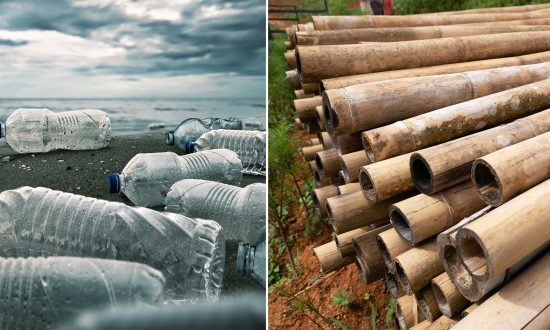 Entrepreneur Invents Plastic Bottle Substitute Made Entirely of Bamboo
