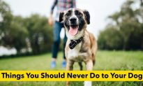 8 Harmful Things That Every Dog Owner Must Absolutely Avoid