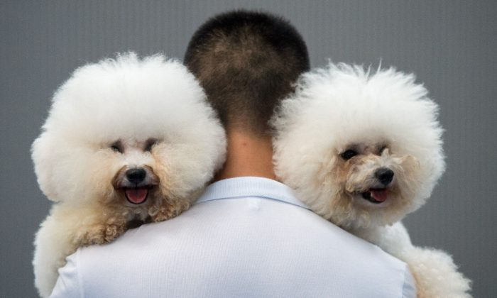 A man holding two dogs in China in this file photo. (Johannes Eisele/AFP/Getty Images)