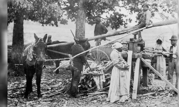 A group of men and women, presumably slaves, grind sugar with the help of mules and a simple machine on a farm, Georgia, mid 19th Century. A child sits atop on the fulcrum of the machine. (L.J. Schira/Hulton Archive/Getty Images)