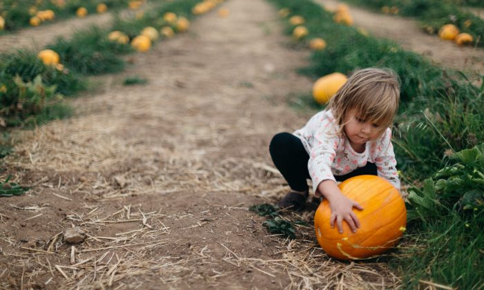 Pumpkin picking is a must-do this time of year.  (Patrick Fore/Unsplash)