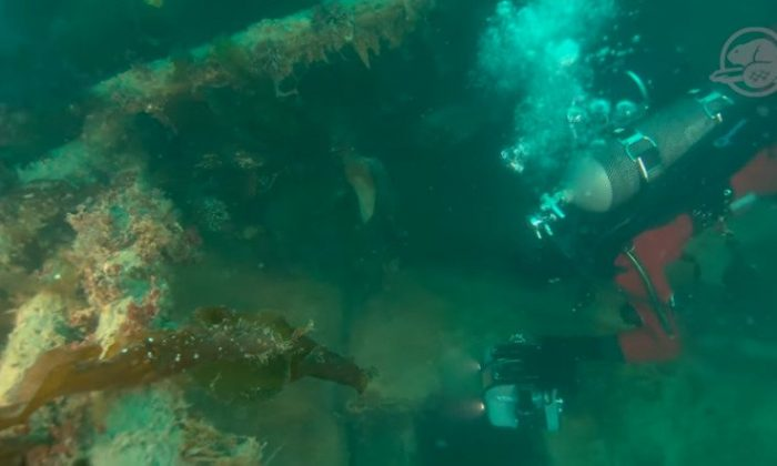 A member of Parks Canada's Underwater Archaeology Team explores the wreckage of HMS Terror. (Underwater Archaeology Team/Parks Canada)