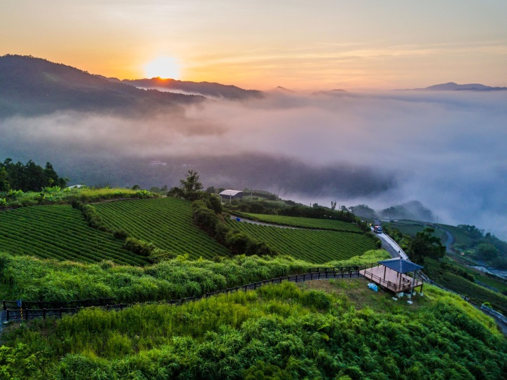 pinglin tea farm