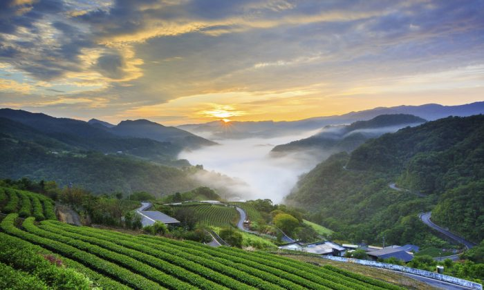 Thousand Island Lake, surrounded by terraced tea plantations, in Pinglin. (Shutterstock)