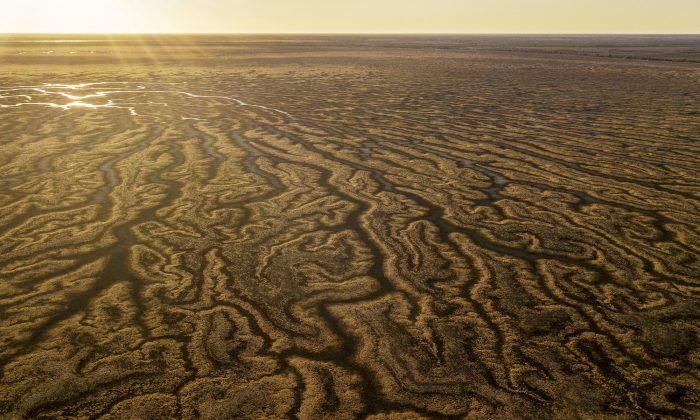 An aerial view of Lake Tandure Menindee, Australia on Aug. 15, 2019. (Mark Evans/Getty Images)