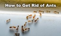 Got Ants? Try These 3 Natural and Effective Tricks to Never See Them in Your Home Again