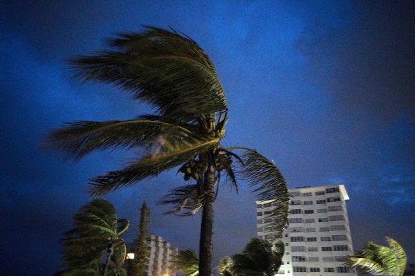 palm tree in Hurricane Dorian wind