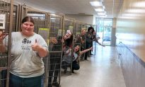 Florida Residents Foster 210 Animals at Shelter As Hurricane Dorian Approaches