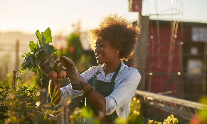 Community gardens can help heal the mind and nurture the body, thanks to the benefits of eating fresh fruits and vegetables, and spending time interacting with nature. (Joshua Resnick/Shutterstock)