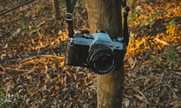 File photo of a camera hanging from a tree. (Felipe Dolce/Unsplash)